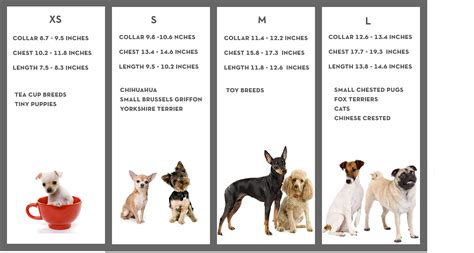 types of dogs chart best of small breeds images breeders guide