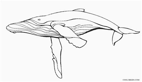 humpback whale pages and activity coloring pages
