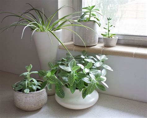 plants in kitchen kitchen plants plantas e pequenos jardins pinterest