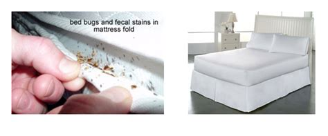 pulci da materasso cimici letto bioallergen