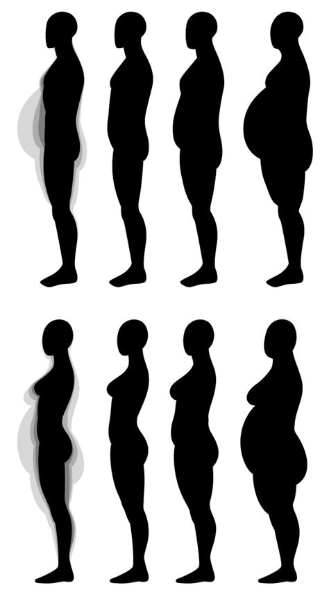 human vector tutorial human anatomy fundamentals muscles and other body mass