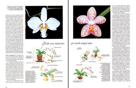 come far fiorire l orchidea dr giuseppe mazza journalist scientific photographer