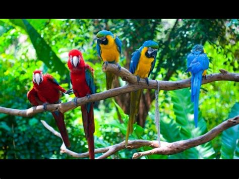 colorful parrots colorful birds colorful parrots colourful birds