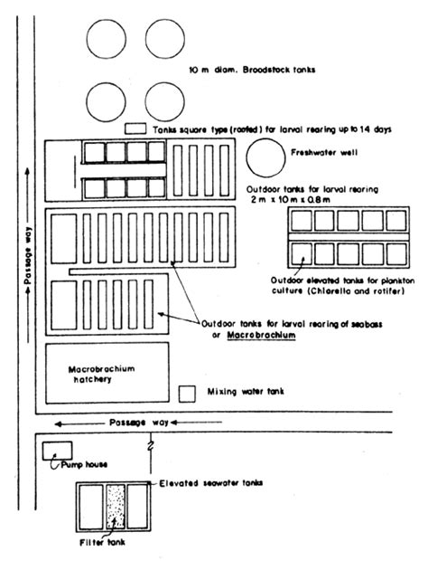 layout of sea bass hatchery report of training course on seabass spawning and larval