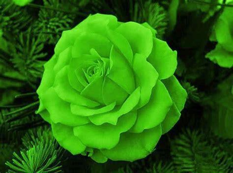 imagenes verdes en movimiento imagenes gifs rosas verdes