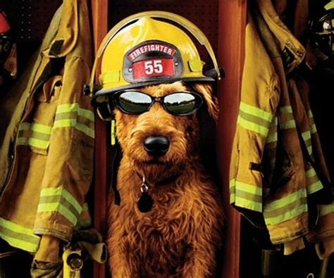 fire house dog movie firehouse dog movie review and ratings by kids