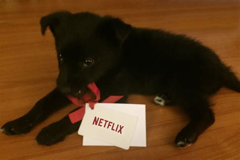 Win A Taste Of Netflix by Win A 6 Month Subscription To Netflix Ca Streamteam