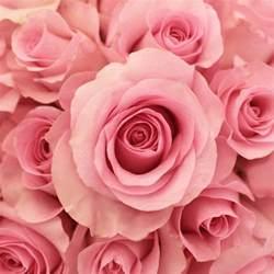 Wedding Flower Vases Wholesale - blushing akito bubblegum pink rose