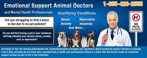 Emotional Support Animal Doctor Letter Exle all you need to about emotional support dogs