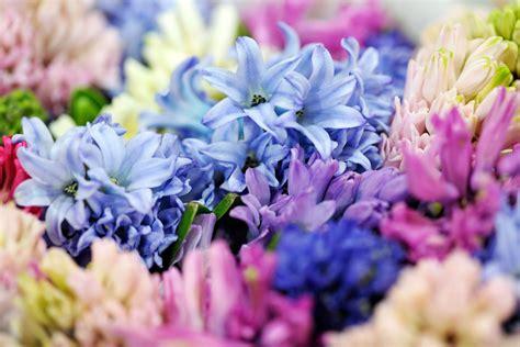 il giardino dei fiori il giardino dei fiori segreti il baule d inchiostro