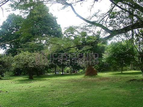 Aburi Botanical Garden Aburi Botanical Garden Accra Pastures New In Gardens Accra And