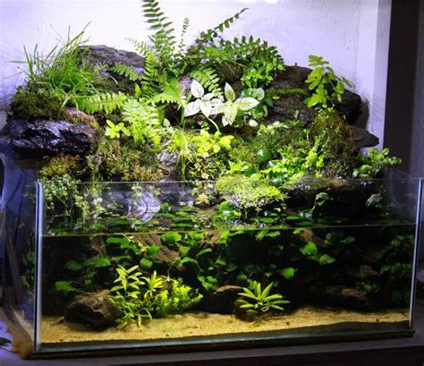 gallon rimless mish mashpaludarium aquascape