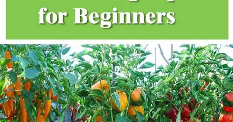 10 Productive Vegetable Gardening Tips For Beginners Vegetable Garden Tips For Beginners