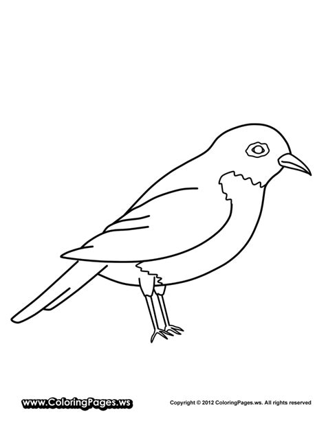 american robin coloring page american robin coloring coloring pages