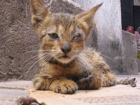 Obat Cacingan Kucing 17 tanda cacingan pada kucing wajib tahu arenahewan