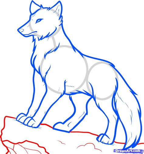 Drawing Wolf by How To Draw Anime Wolves Anime Wolves Step By Step