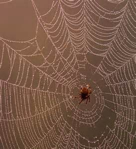 Are Spiders Attracted To Light by The Best 28 Images Of Are Spiders Attracted To Light