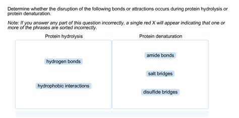 protein hydrolysis solved determine whether the disruption of the following
