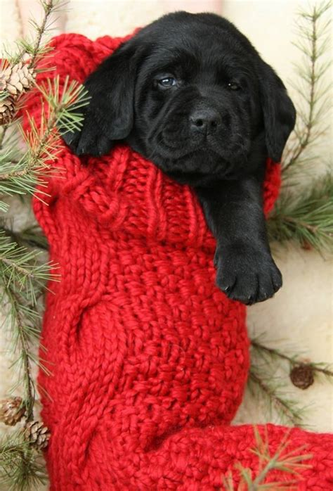 adorable stocking stuffer pictures   images  facebook tumblr pinterest  twitter