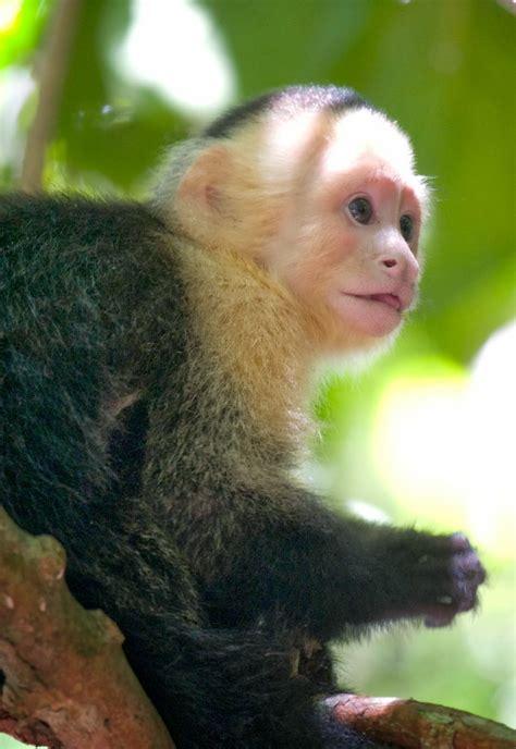 diary   primatologist   petition