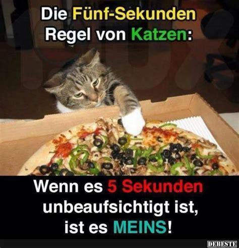 Katzen Meme - die f 252 nf sekunden regeln von katzen debeste de