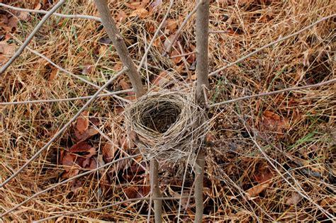 folkways notebook unknown winter bird nest