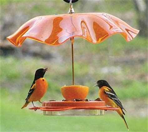 how to attract baltimore orioles to your backyard wild birds unlimited what s the best way to attract orioles