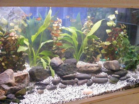 Decor Polystyrene Aquarium by D 233 Cor De Fond Aquarium Eau Douce Esth 233 Tique