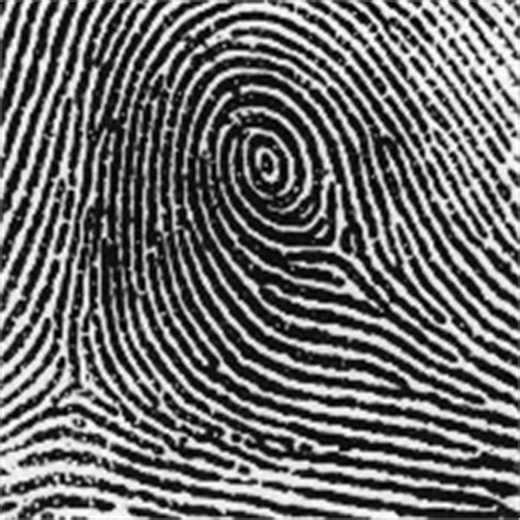 fingerprint pattern meaning meaning of fingerprints we must know