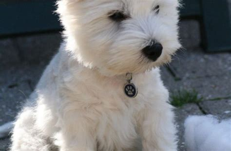 show me pictures of baby puppies tag for show me pictures of puppies tag for show me pictures of