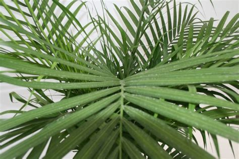 types of indoor plants indoor plants palm 2015