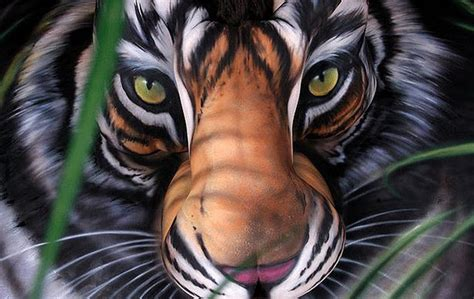 tiger paint tiger pictures