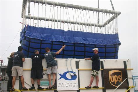ship via ups how to ship a beluga whale via ups