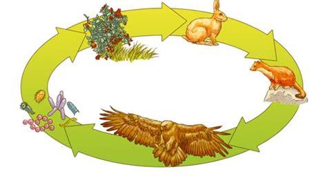 catena alimentare nel bosco la piramide alimentare nel bosco