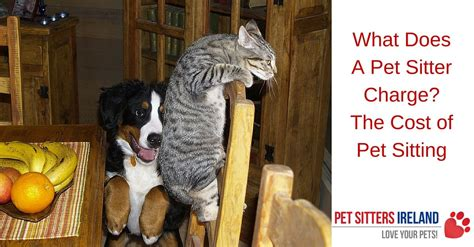 sitter rates overnight what does a pet sitter charge