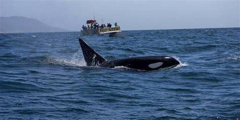 morro bay boat tours sub sea tours and kayaks morro bay ca winecountry