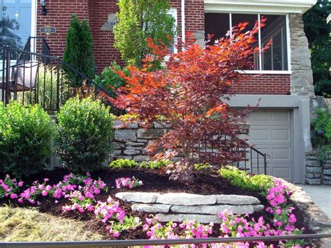 maple tree front yard 55 best japanese maples landscaping images on landscaping backyard patio and gardening