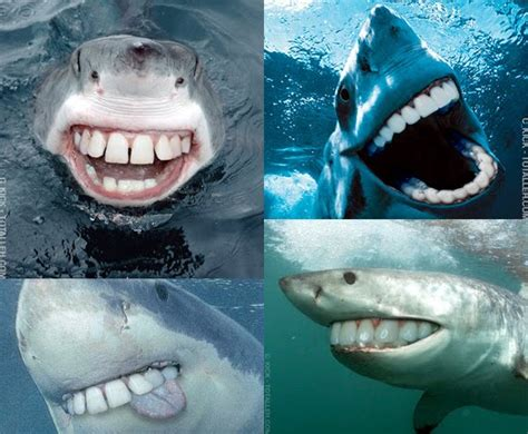 can sharks see color a capital sharks are the stupidest animals i