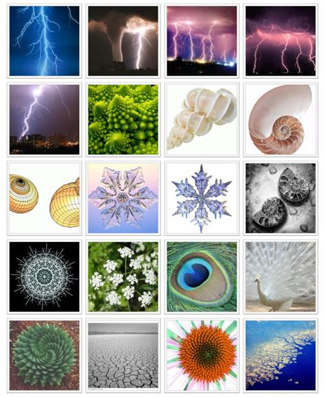 patterns in nature art activities image gallery mathematical patterns in nature