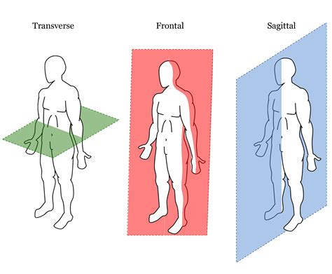 what is a transverse section movies and your body both look better in 3d understanding