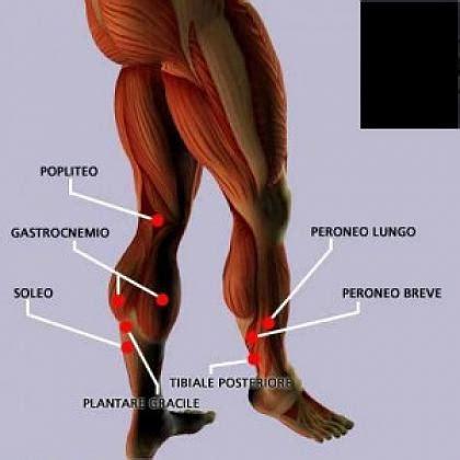 dolore polpaccio interno metodo allenamento crescita muscoli polpacci