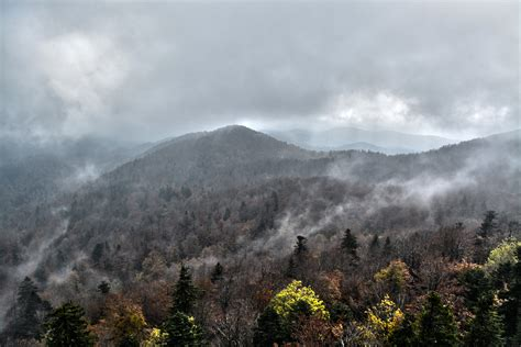 images tree wilderness snow cloud sky fog