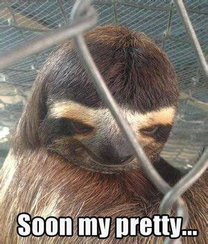Asthma Sloth Meme - 17 best ideas about sloth memes on pinterest are sloths