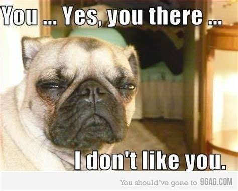 i dont like dogs hilarious i don t like you like image 458022 on favim