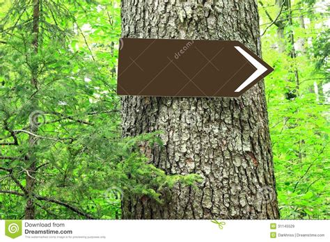 time trees directions blank direction sign on tree royalty free stock images