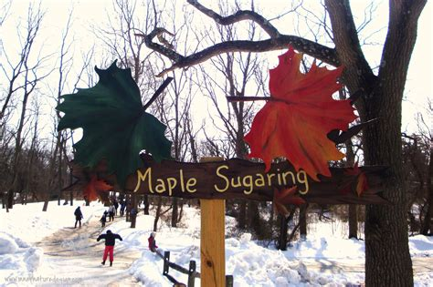 backyard maple sugaring backyard maple sugaring inner nature design interior