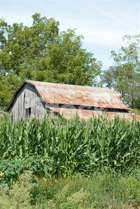 Barn Top Barn Top In Corn Field Stock Photos Freeimages