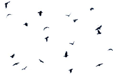 themes tumblr zapytaj tag for background tumblr black and white bird birds