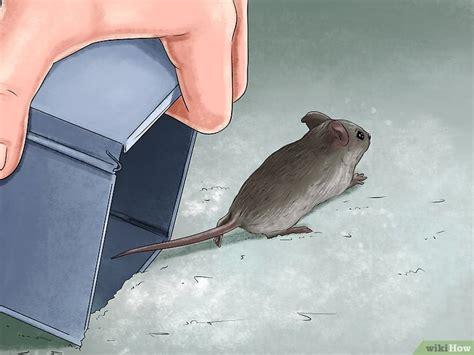 Cuci Gudang Sticky Buddy cara melepaskan tikus hidup dari perangkap lem wikihow