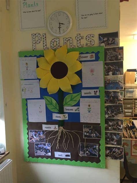 themes for ks2 plants display ks1 ideas for teaching pinterest